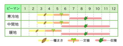 ピーマン 新規就農レッスン 栽培カレンダー