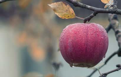 雨に濡れた果実