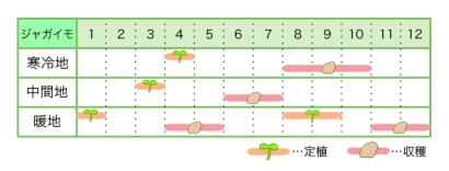 ジャガイモ 新規就農レッスン 栽培カレンダー