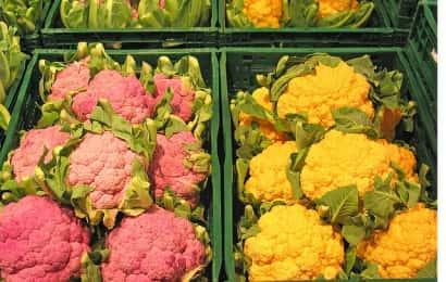 ピンクや黄色のカリフラワーの花蕾