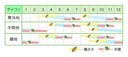 ダイコン 新規就農レッスン 栽培カレンダー