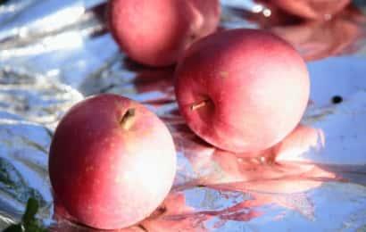 反射シートの上のりんご