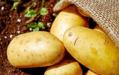 袋から出たジャガイモと畑