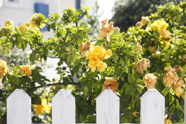 白い花壇の柵と黄色い花