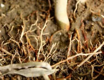 伸びたたくさんの木の根