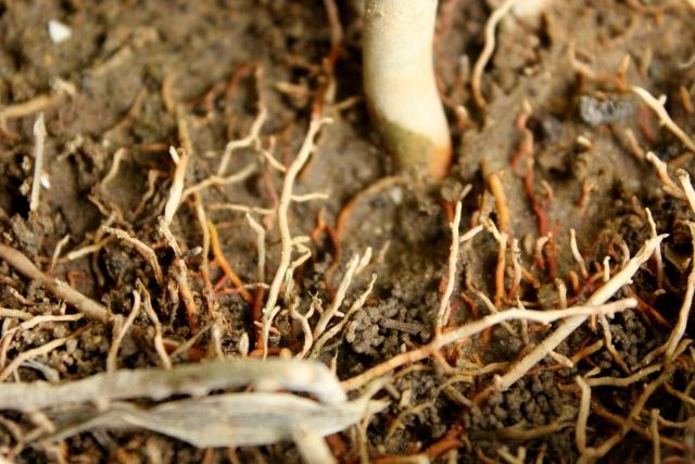 たくさん伸びた木の根