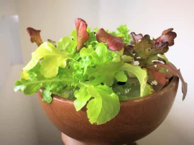 葉物が育つ自作水耕栽培器