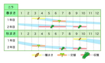 ニラ 新規就農レッスン 栽培カレンダー