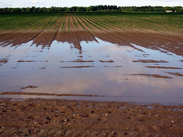 水はけの悪い畑