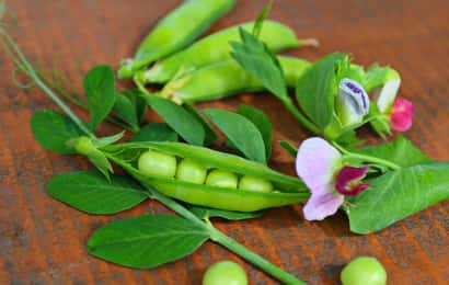 スナップエンドウと紫の花