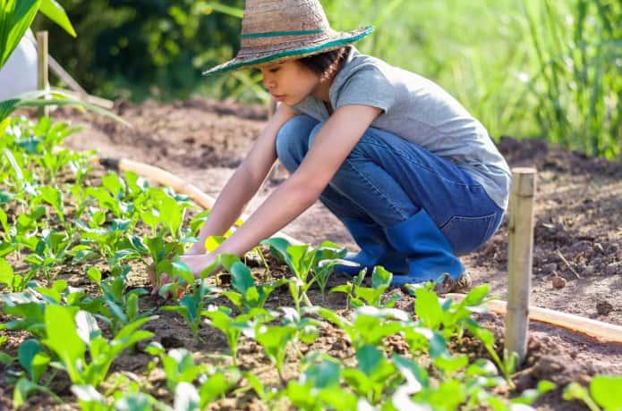 夏に野菜栽培をしている女の人