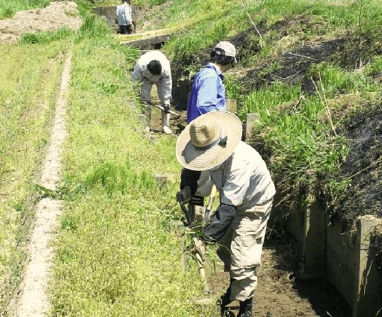 男性数人が水路の清掃をしている様子