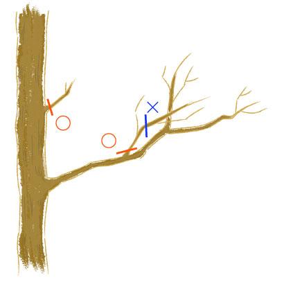 樹形を乱す枝の剪定場所のイラスト