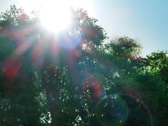 高温障害、生理現象、直射日光