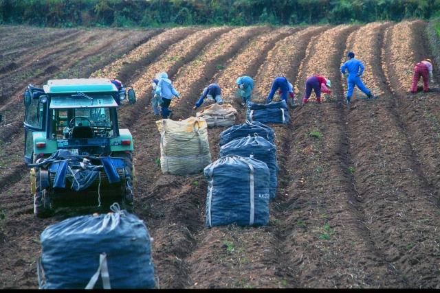 畑で働く人々