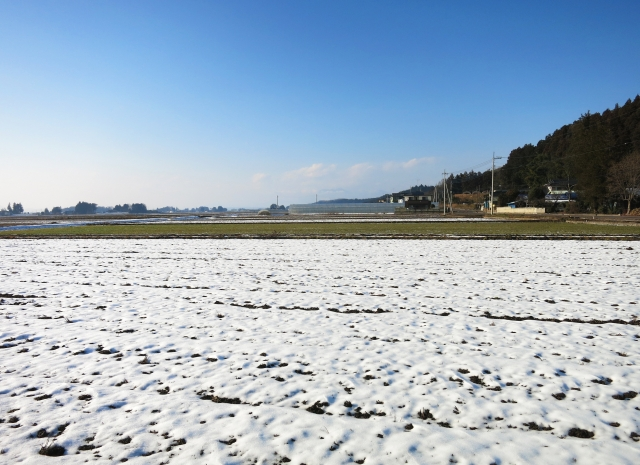 冬の畑の様子