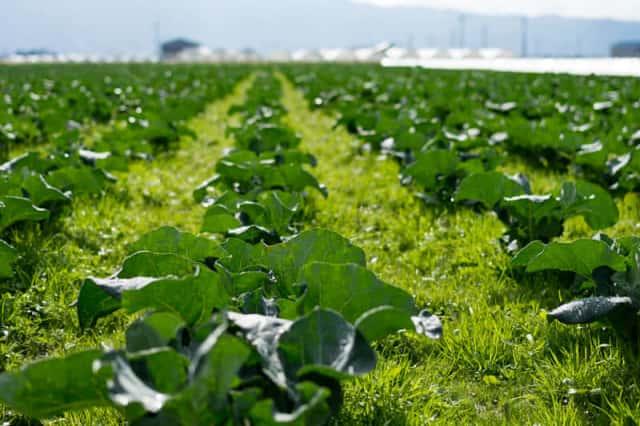 作物と雑草