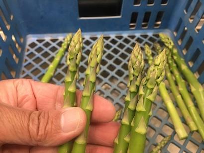 タケイファーム、収穫