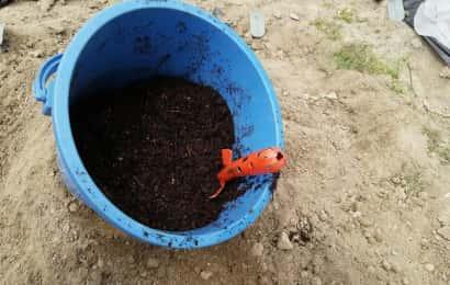 バケツの中で肥料を混ぜる