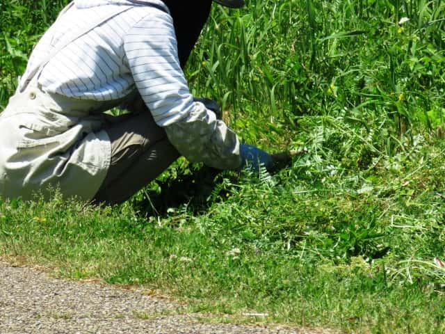 雑草むしりをしている人