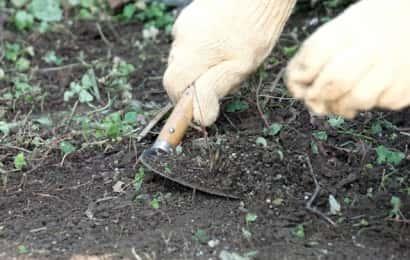 雑草を鎌で刈っている様子