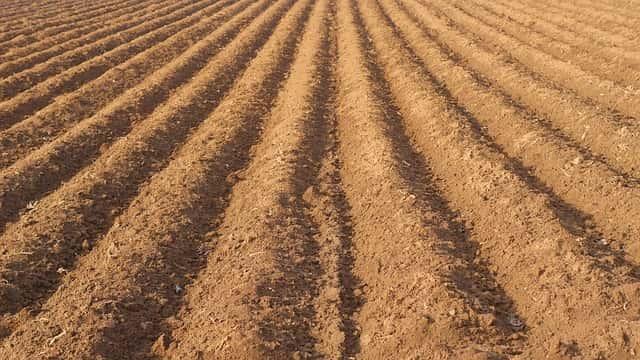 土壌、畑、耕起