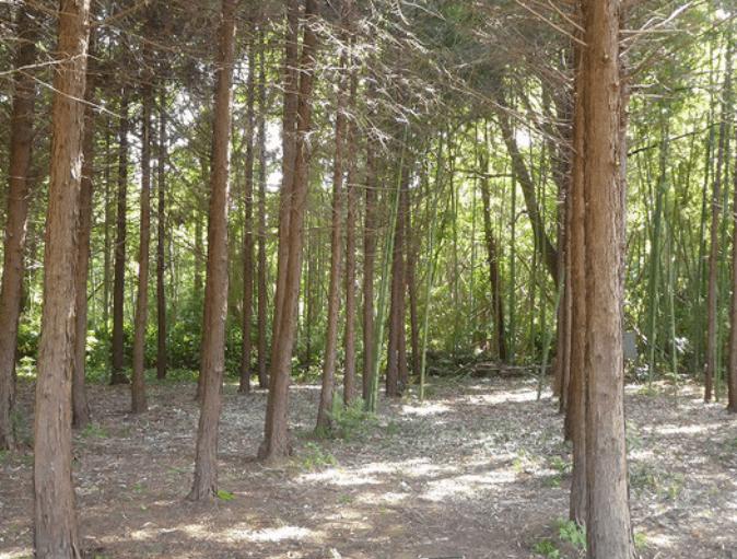 整備の終わった森