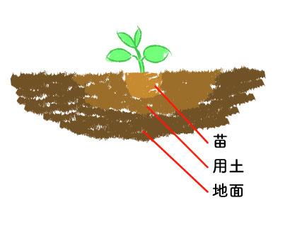 地植え手順