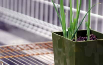 鉢植えで葉ネギを育てる