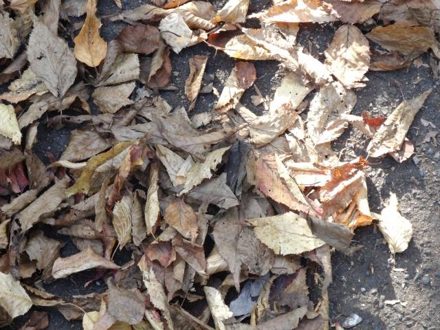 落ち葉の様子