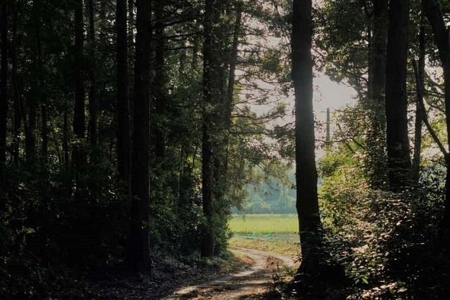 農園を取り囲む森