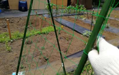 園芸ネットを張る様子