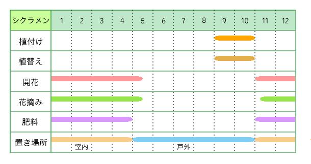 シクラメン、育て方、栽培カレンダー