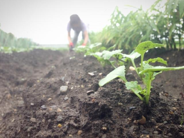湿った土と苗