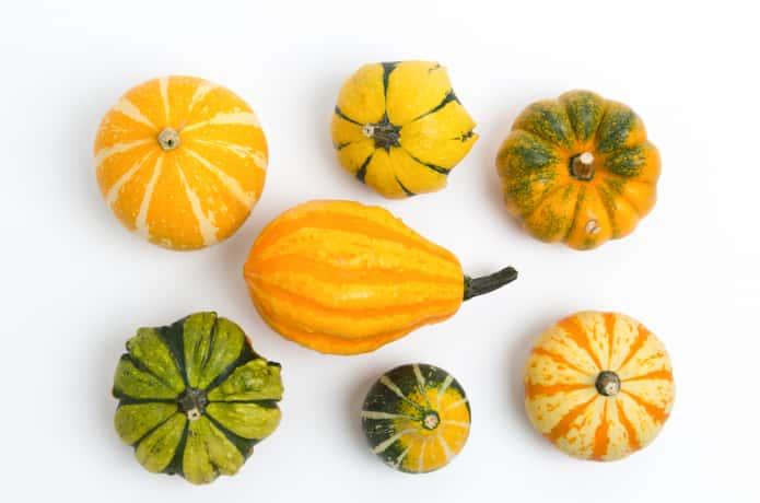 おもちゃかぼちゃを並べる