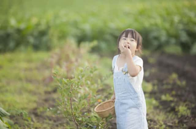 ブルーベリーを食べる子ども