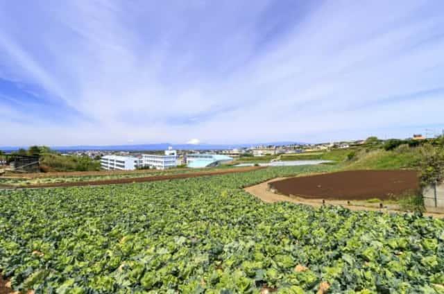農地の風景