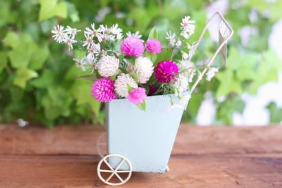 センニチコウ 切り花