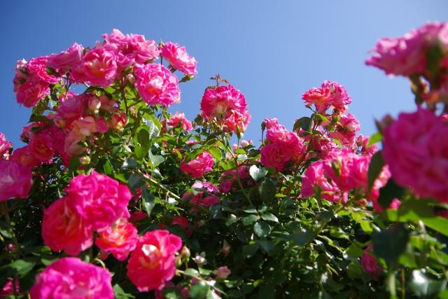 たくさんのきれいな花がガーデンに咲く