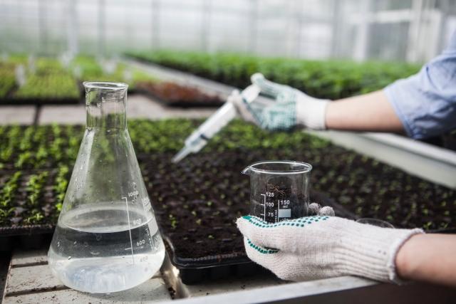 苗を肥料を与える手