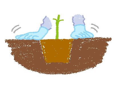 センニチコウの植え付けイメージ