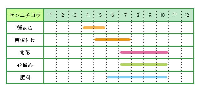 センニチコウ、栽培カレンダー