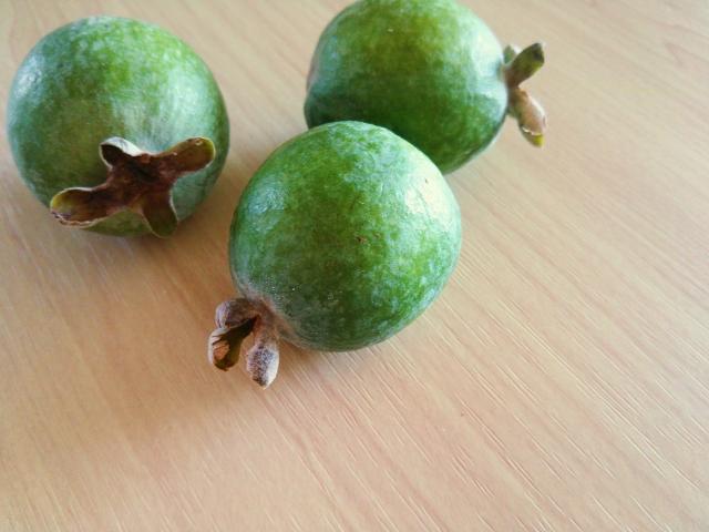 丸くボールのように実ったフェイジョアの緑の実