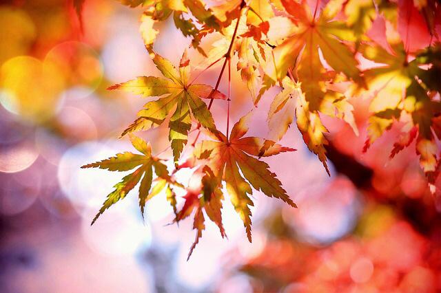秋の七十二侯
