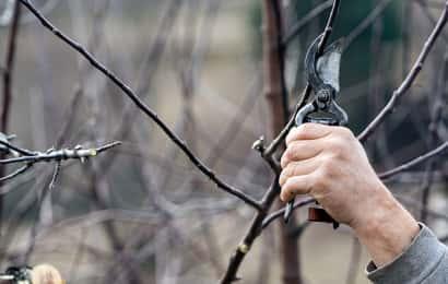 木の剪定をする人の手と剪定ばさみ