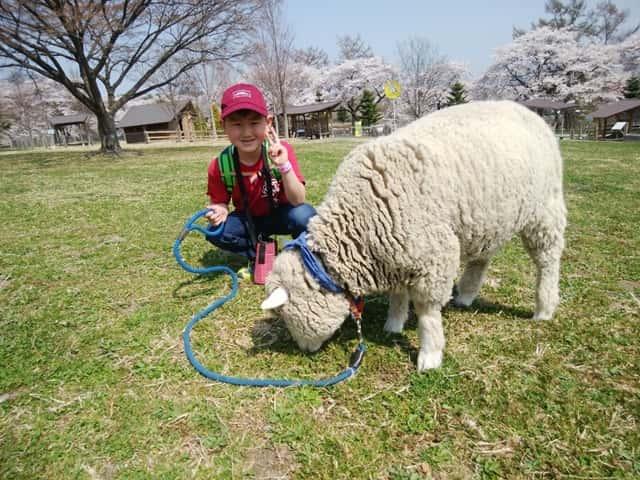 羊を散歩させている子供