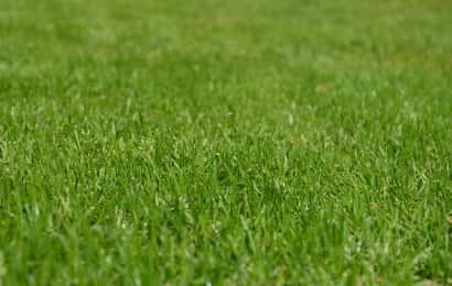 青々とした芝
