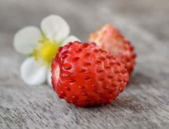 ワイルドストロベリーの実と花