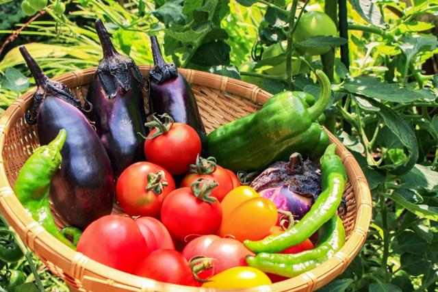 ナス、トマト、ピーマンなどがおいしそうに実る