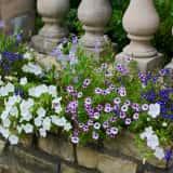 縁石に咲く色とりどりの花